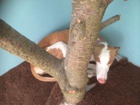 und zwei bis drei Hunde finden außerdem auf der gemauerten Eckbank Platz, am liebsten hinter dem Kirschbaum.