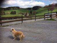Wildewiese - auch für den Wintersport spannend.